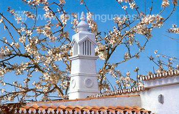 Fleurs à Faro
