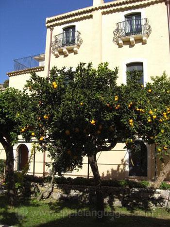 Arbres fruitiers dans le jardin de l'école